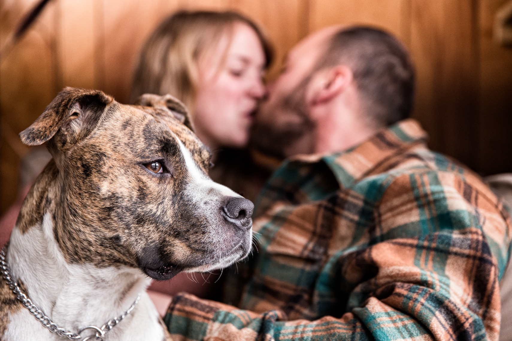 Los Angeles Dog Photography, Michael Brian, Pit Bull, Purina ONE, kissing parents, Zeus Jones, 28 Day Challenge, Asheville, North Carolina