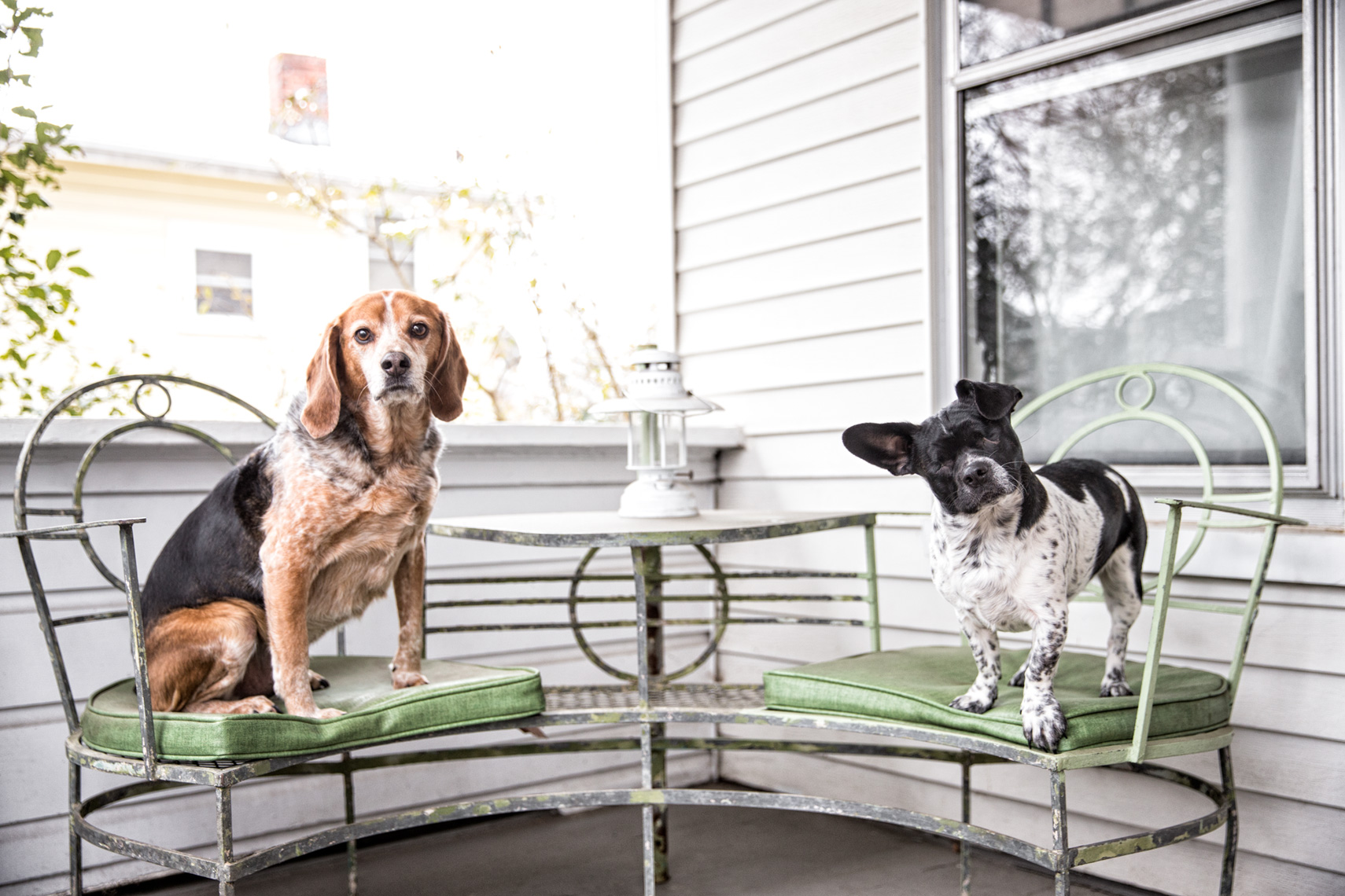 Los Angeles Dog Photography, Michael Brian, pet, cat, Blind black and white dog, Portrait of two dogs in chairs on porch of house, Zeus Jones Purina ONE 28 Day Challenge Asheville, North Carolina