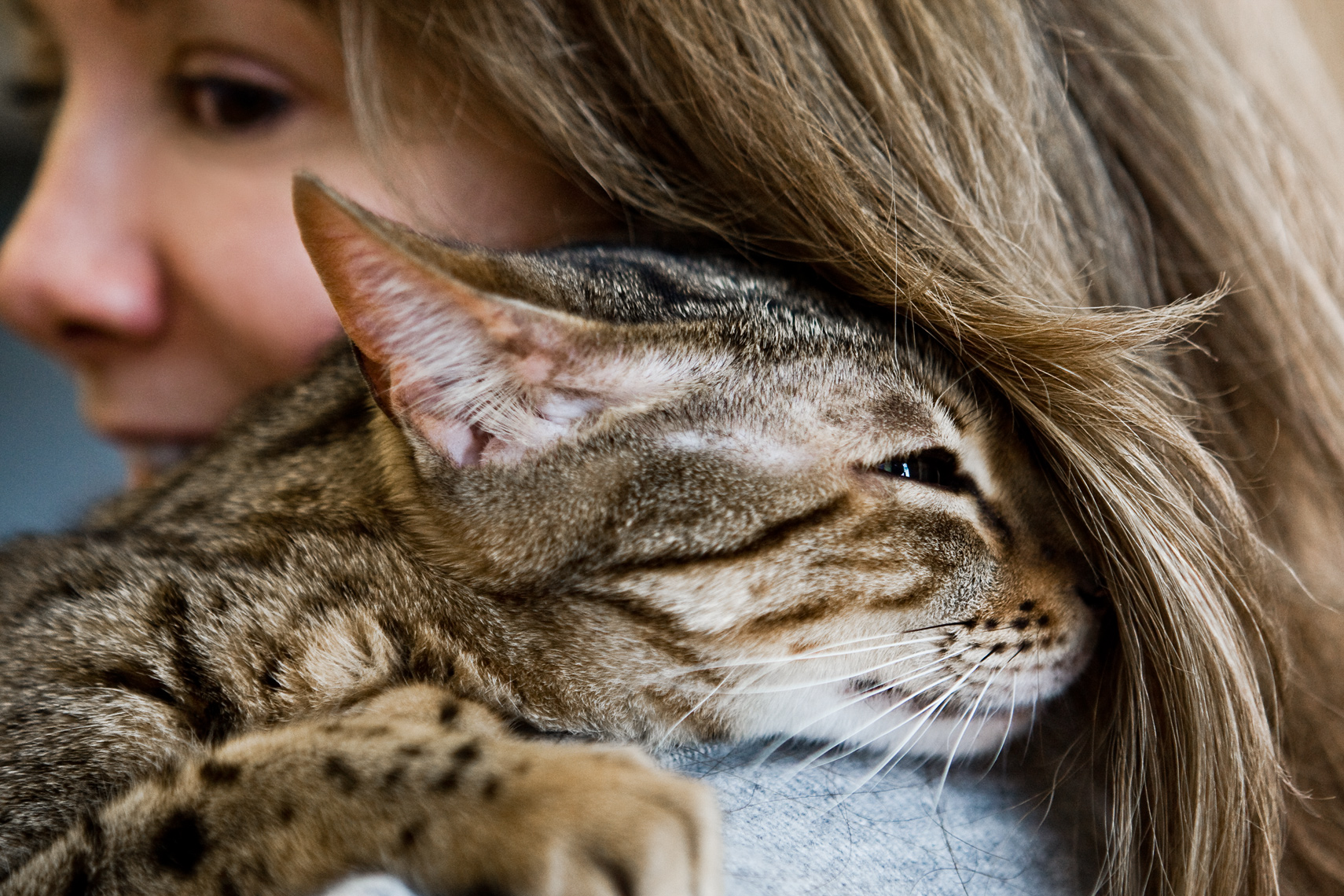 Los Angeles Cat Photography, Michael Brian, pet, dog, Bengal cat snuggling in shoulder of Mom