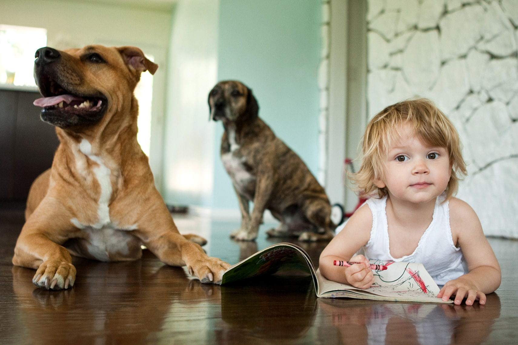 Los Angeles Dog Photography, Michael Brian, pet, cat, children, Young girl on floor draws in coloring book as dogs watch