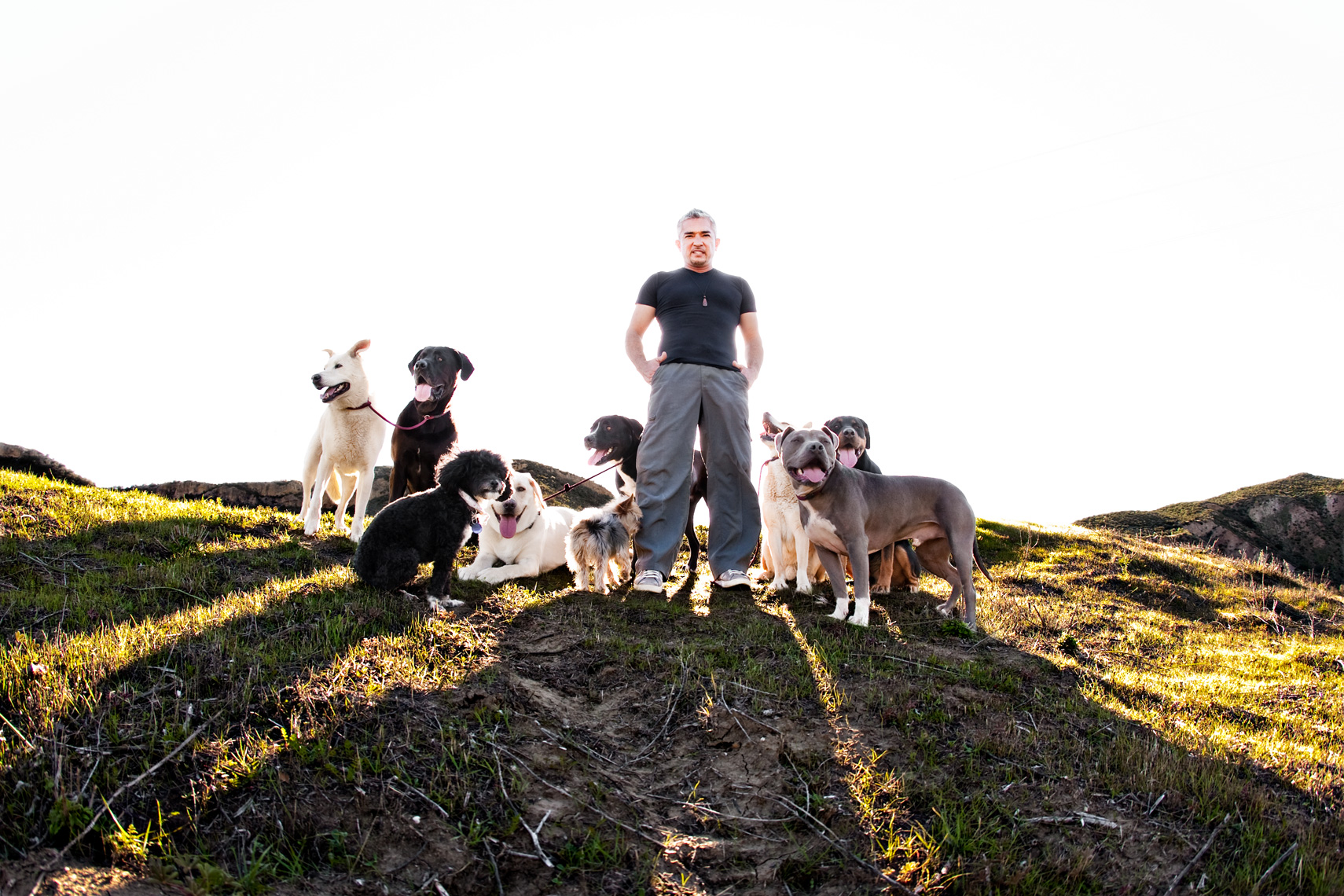 Los Angeles Dog Photography, Michael Brian, Cesar Millan, Dog Whisperer, Pit Bull, dog pack, Cesar