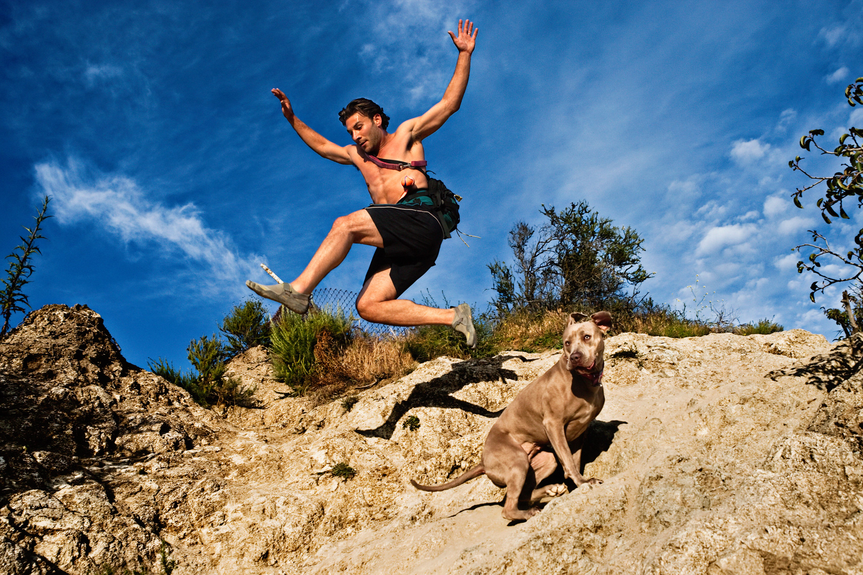Los Angeles Dog Photography, Michael Brian, pet, cat, Athletic man jumps over Pit Bull, hiking, Runyon Canyon