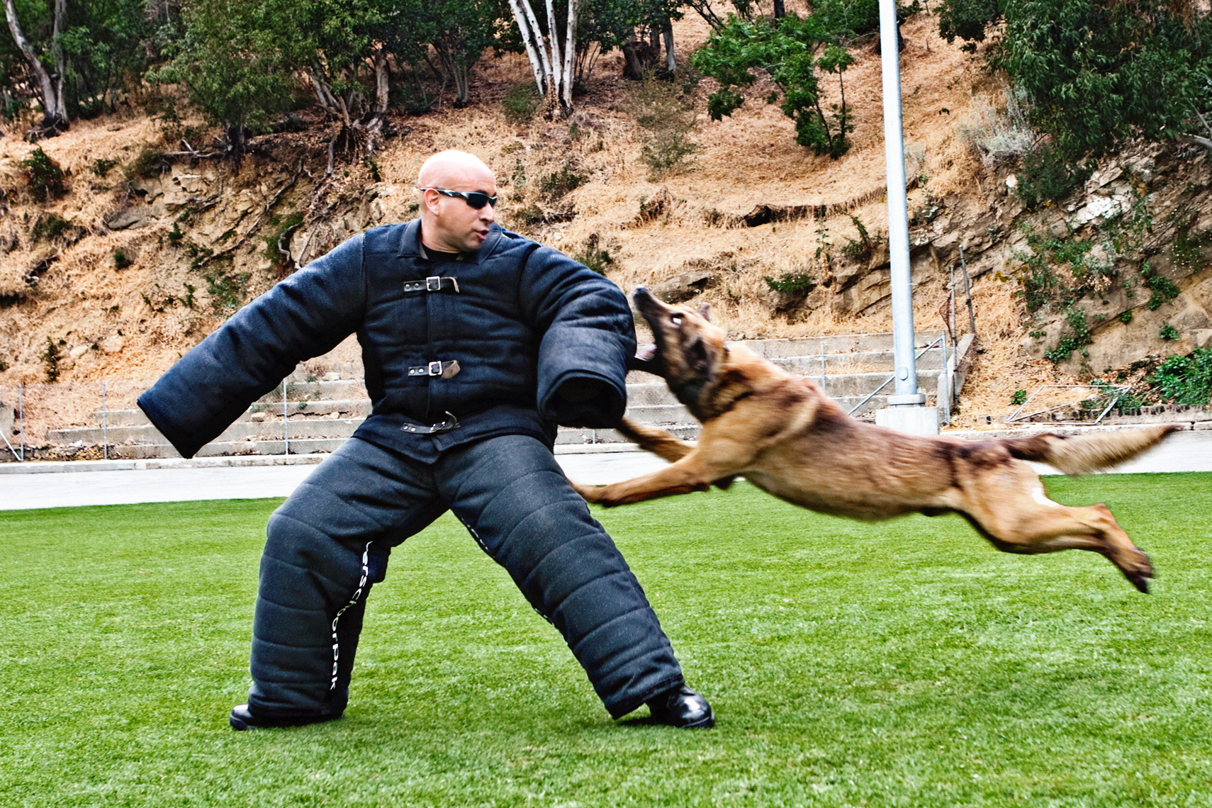 Los Angeles Dog Photography, Michael Brian, LAPD Officer and K-9, Blegian Malinois, Cesar Millan, attack training, Los Angeles Police Department, Cesar