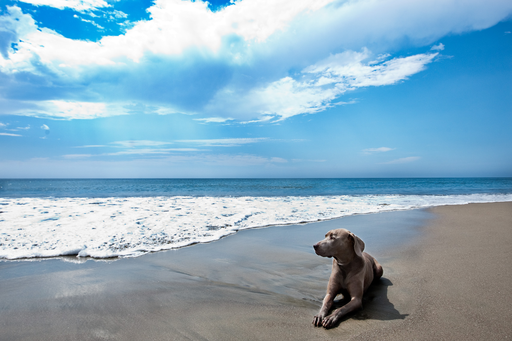 Los Angeles Dog Photography, Michael Brian, Weimaraner laying on beach, Padero Beach, California