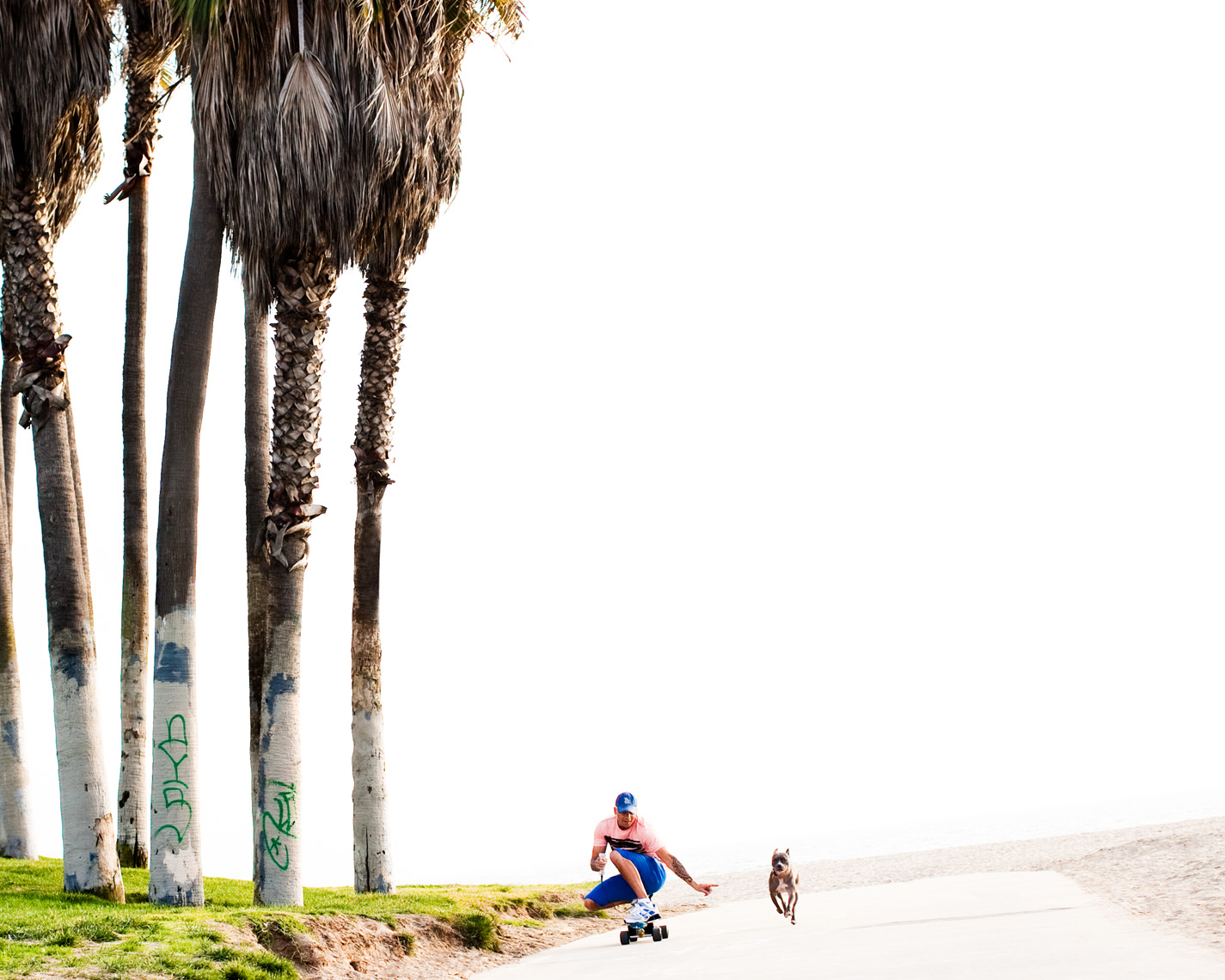 Los Angeles Dog Photography, Michael Brian, pet, cat, Tyson Kilmer, Pit Bull, Venice beach skateboard, Kasha Fierce, Dog Trainer