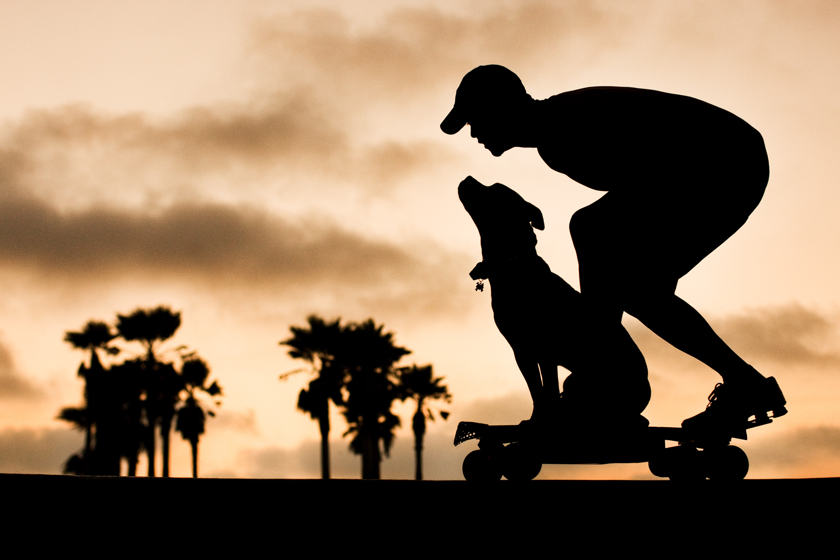 Los Angeles Dog Photography, Michael Brian, pet, cat, Sunset silohouette,  Tyson Kilmer on skateboard with Pit Bull, Dog Trainer, Blue Nose, Kasha Fierce