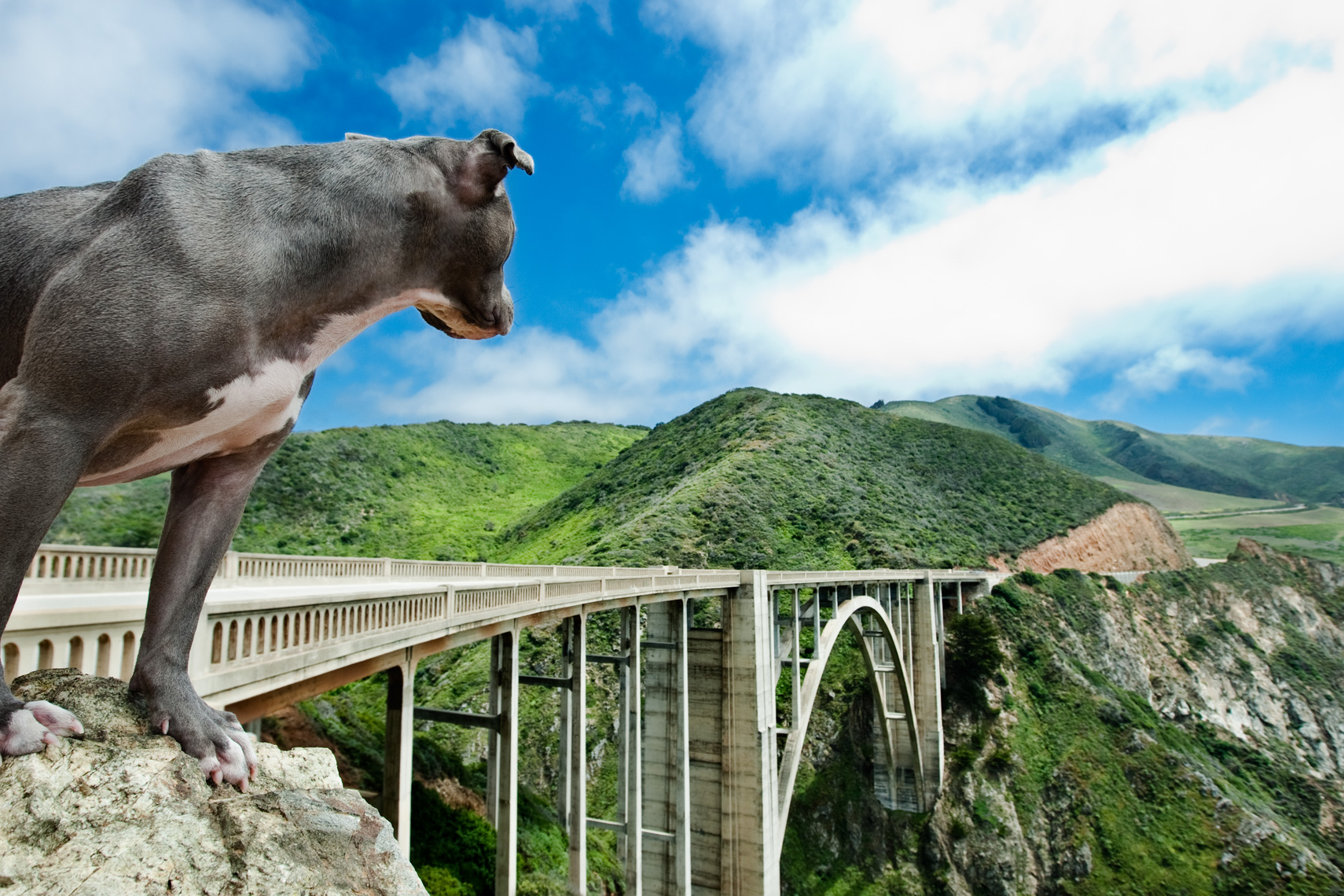 Los Angeles Dog Photography, Michael Brian, Pit Bull on Bixby Bridge, Highway 1, Blue Nose, Kasha Fierce, California