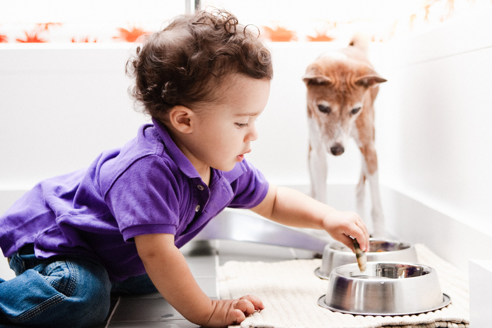 Los Angeles Dog Photography, Michael Brian, pet, cat, children, Two year old boy dunks cookie in dog