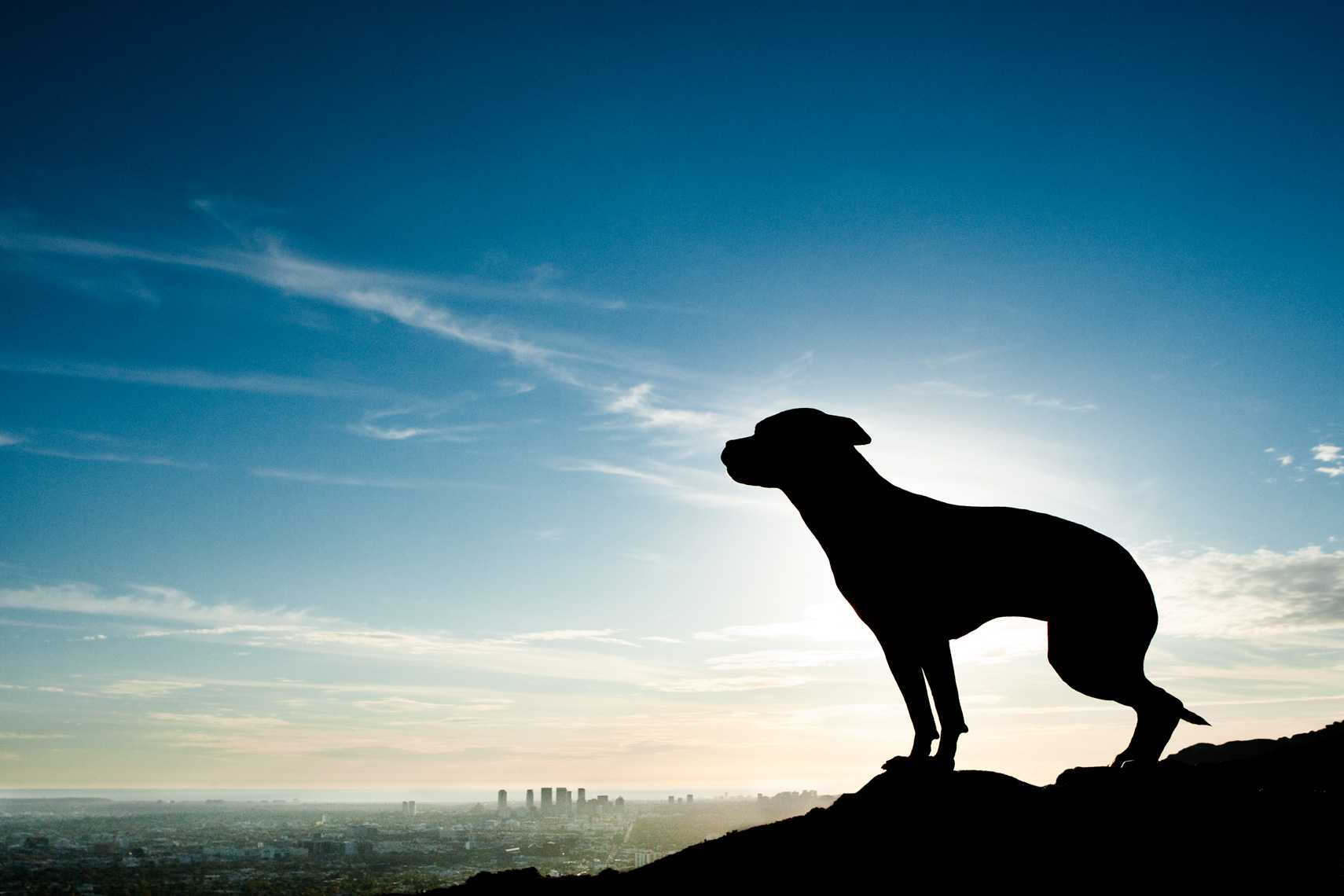 Los Angeles Dog Photography, Michael Brian, Pit Bull sunset silhouette, Blue Nose, Kasha Fierce, California