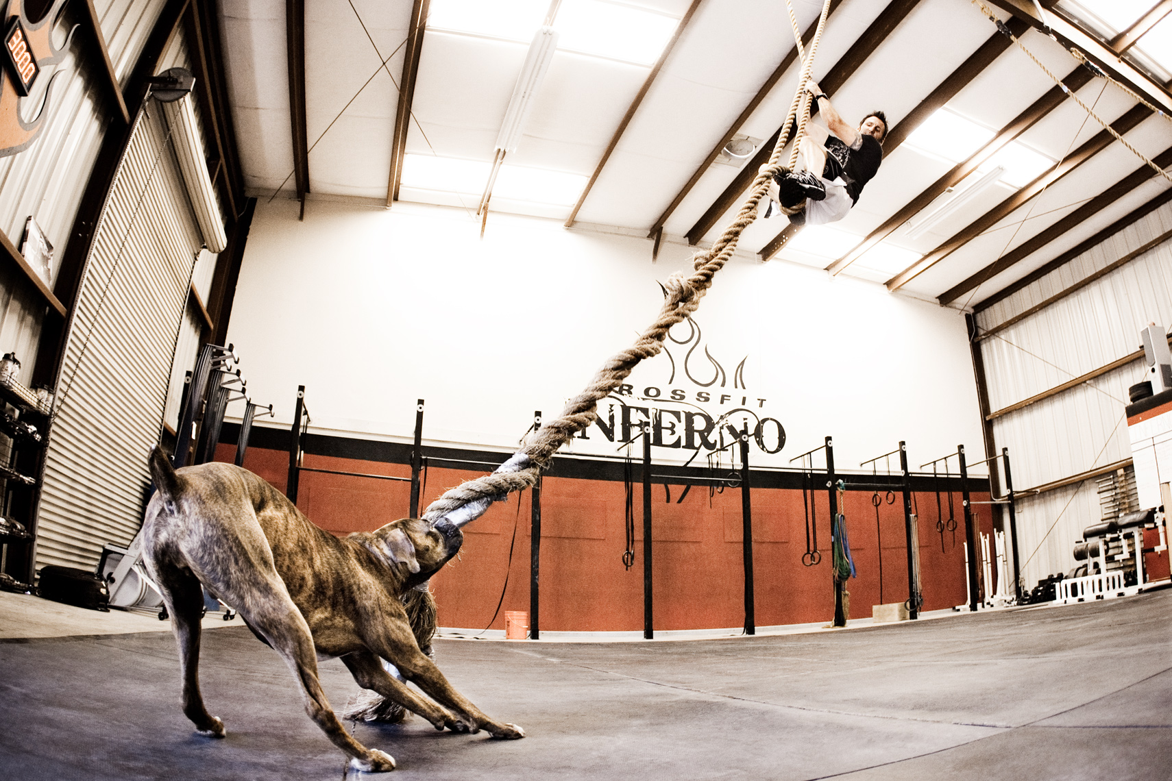 Crossfit, LA Dog Photography, Michael Brian, Los Angeles, Sports, Bill Grundler, Crossfit,  rope climb, Boxer dog pulling on rope