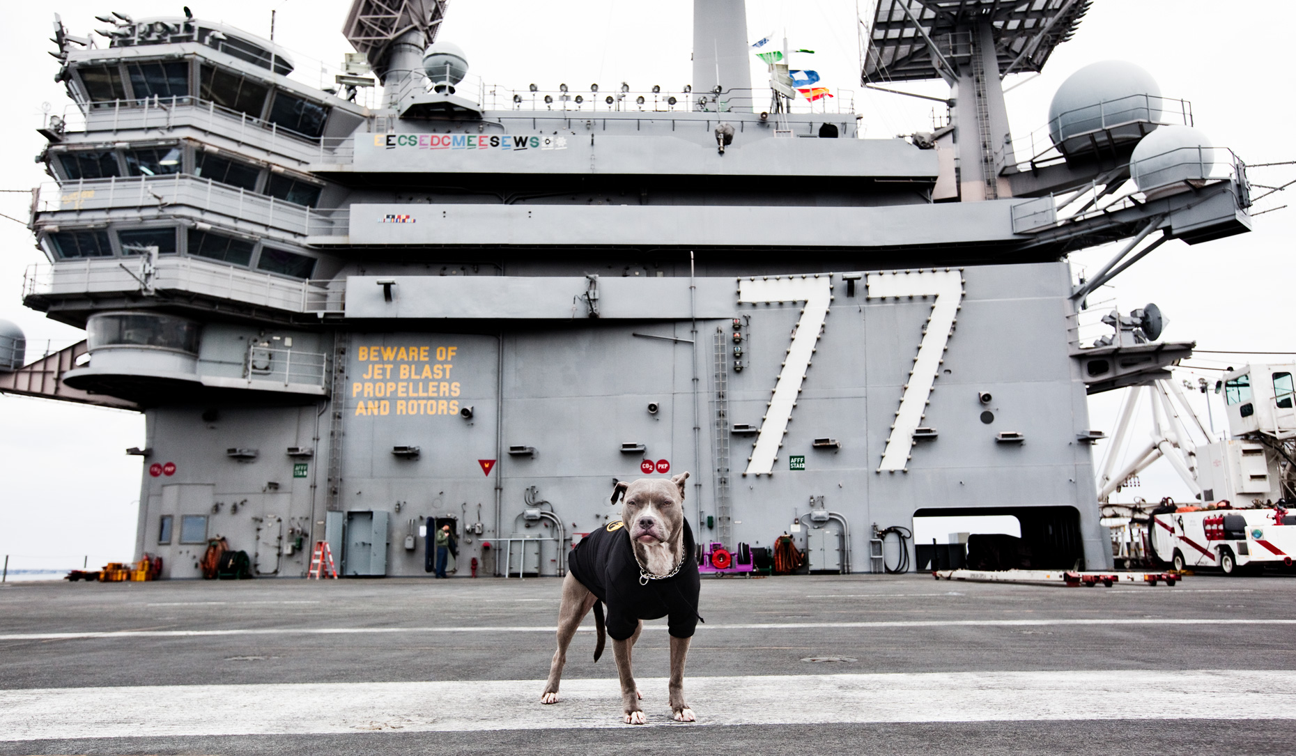 Los Angeles Dog Photography, Michael Brian, Pit Bull on deck of USS George HW Bush, Blue Nose Pit Bull Kasha Fierce on nuclear-powered aircraft carrier