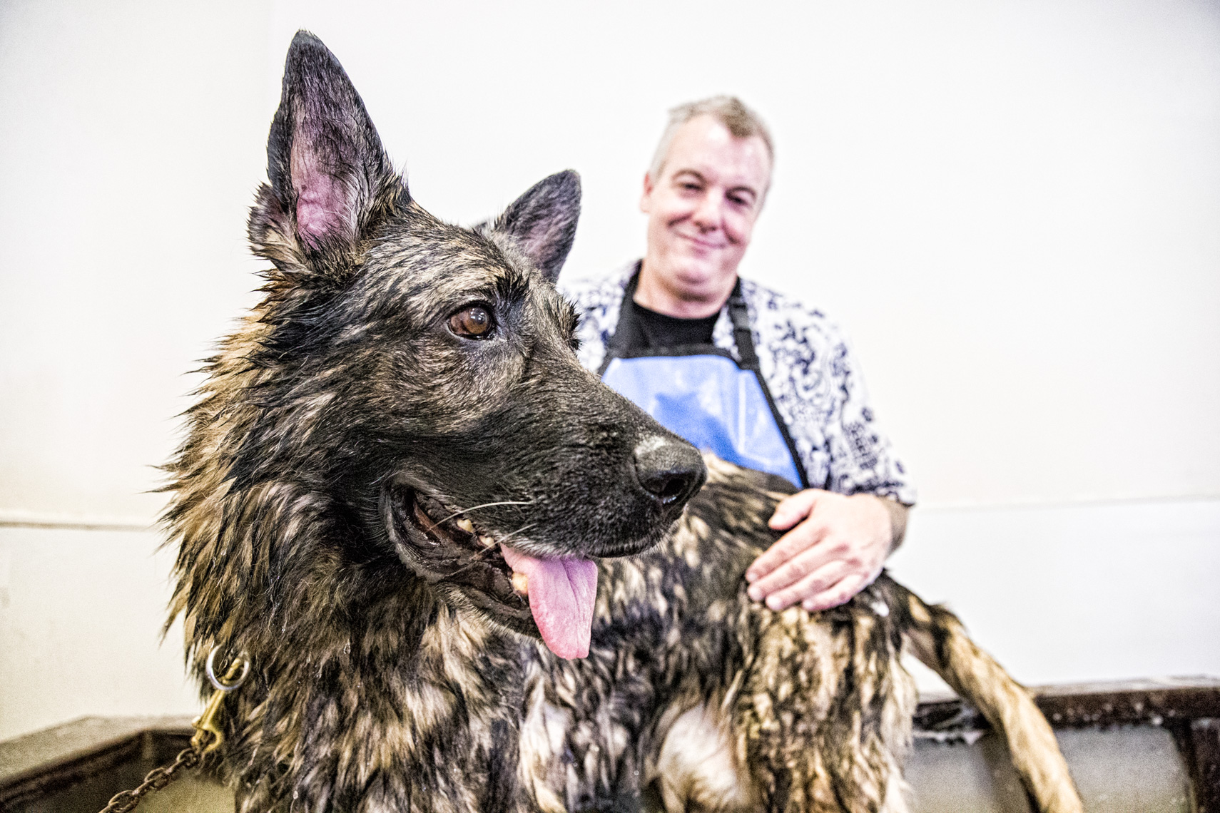 Los Angeles Dog Photography, Michael Brian, Police K-9 dog bath, Santa Barbara Police, Brag