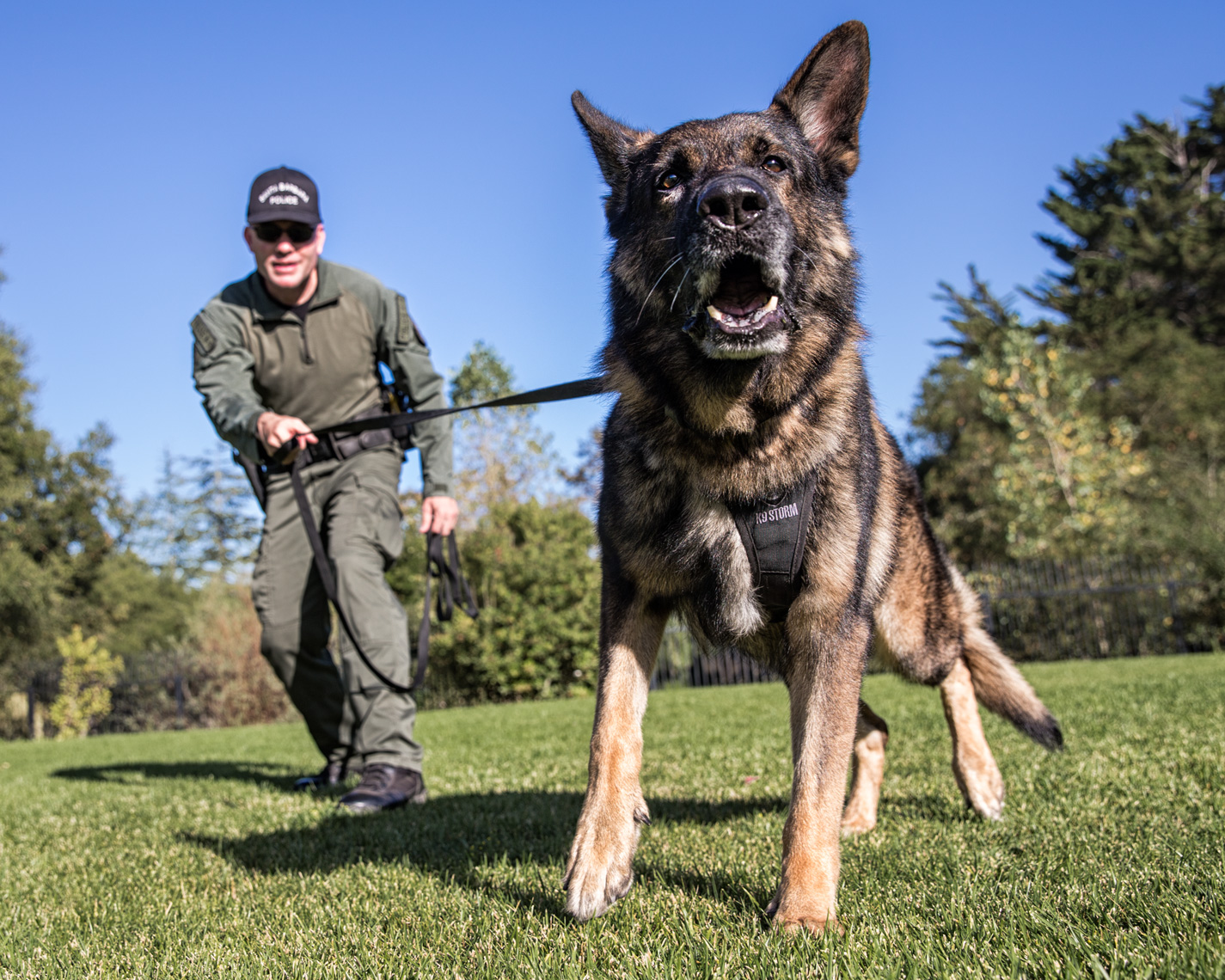 Los Angeles Dog Photography, Michael Brian, Police K-9 training, Santa Barbara Police. Brag with officer David Hedges