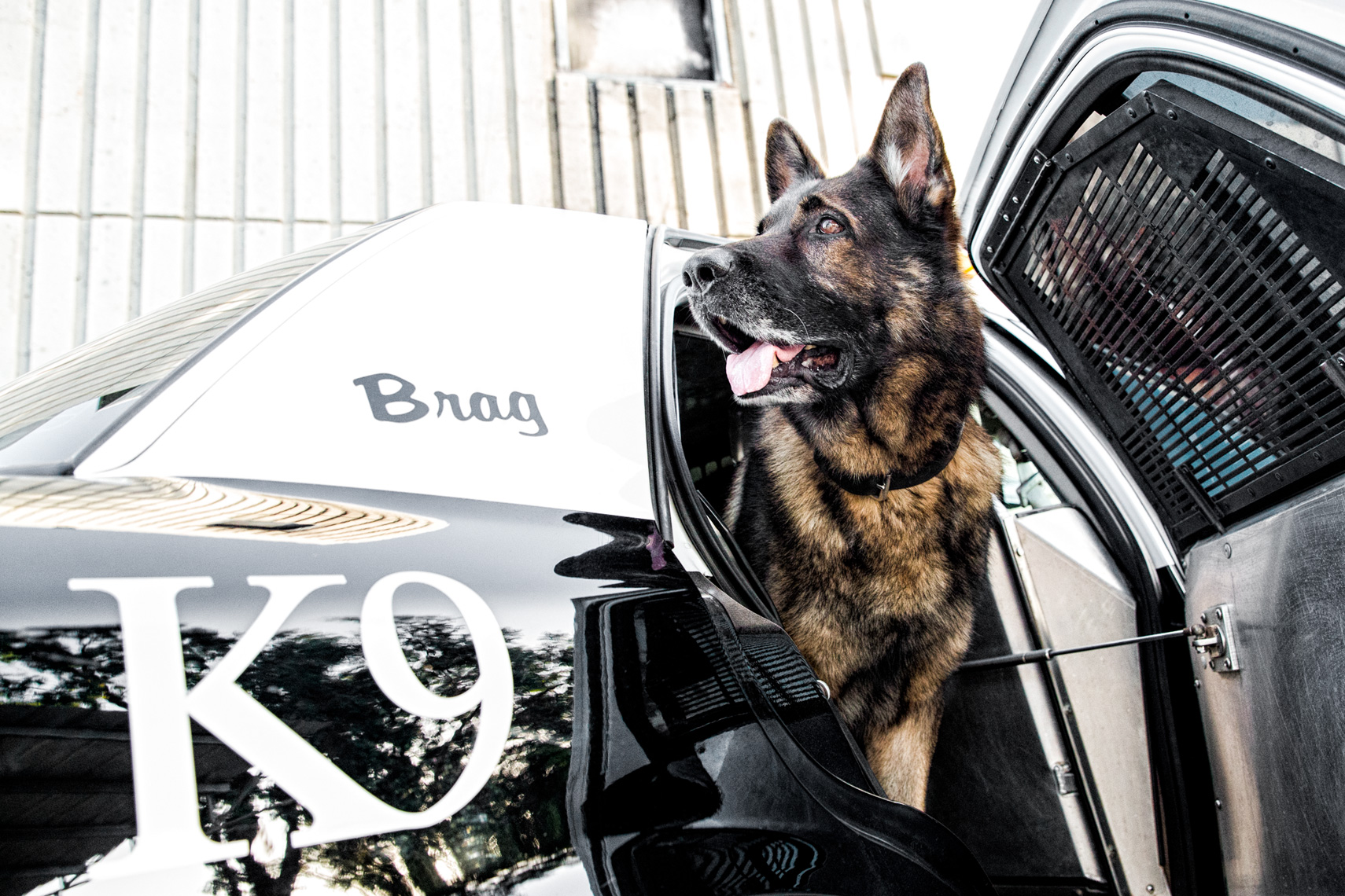 Los Angeles Dog Photography, Michael Brian, Police K-9 in patrol car, Santa Barbara Police, Brag