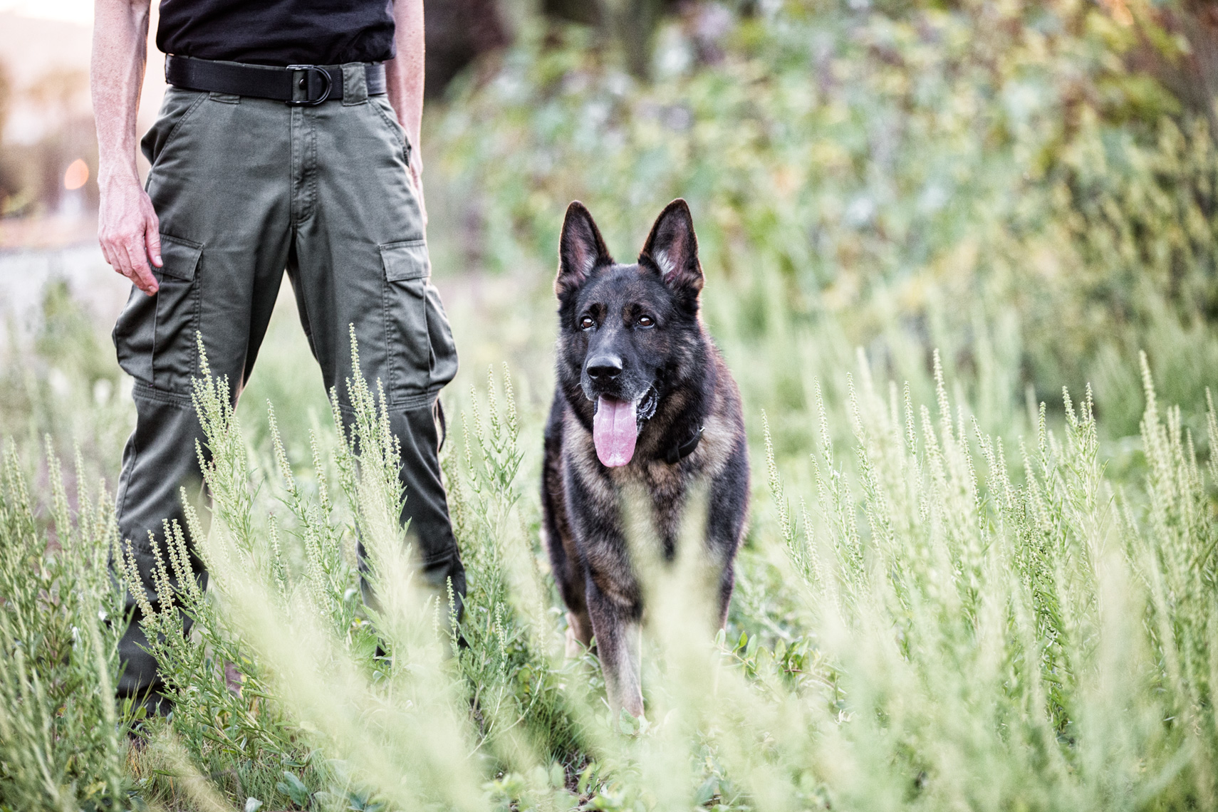 Los Angeles Dog Photography, Michael Brian, Portrait of Santa Barbara Police K-9 Brag with officer David Hedges