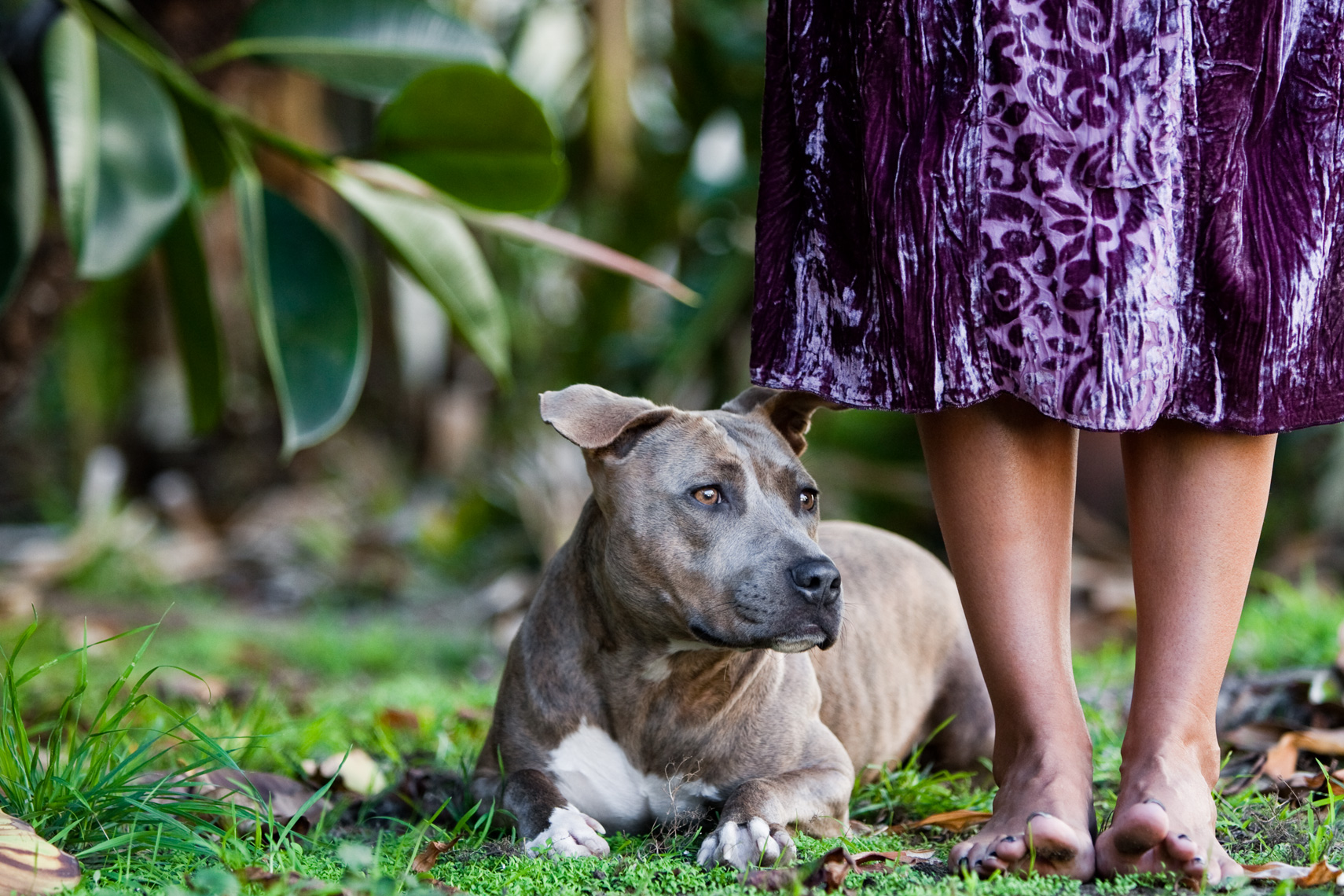 Los Angeles Dog Photography, Michael Brian, pet, cat, Pit Bull at the feet of woman with long purple dress