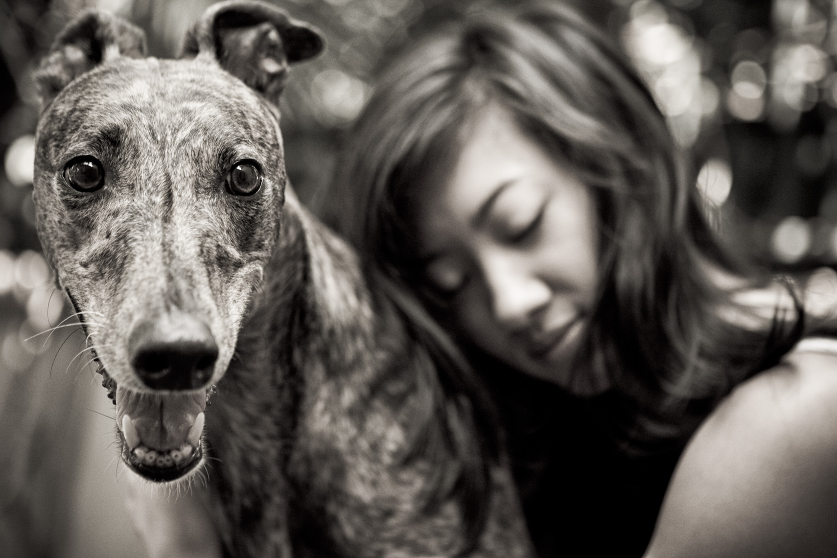 Los Angeles Dog Photography, Michael Brian, Asian girl hugging Greyhound