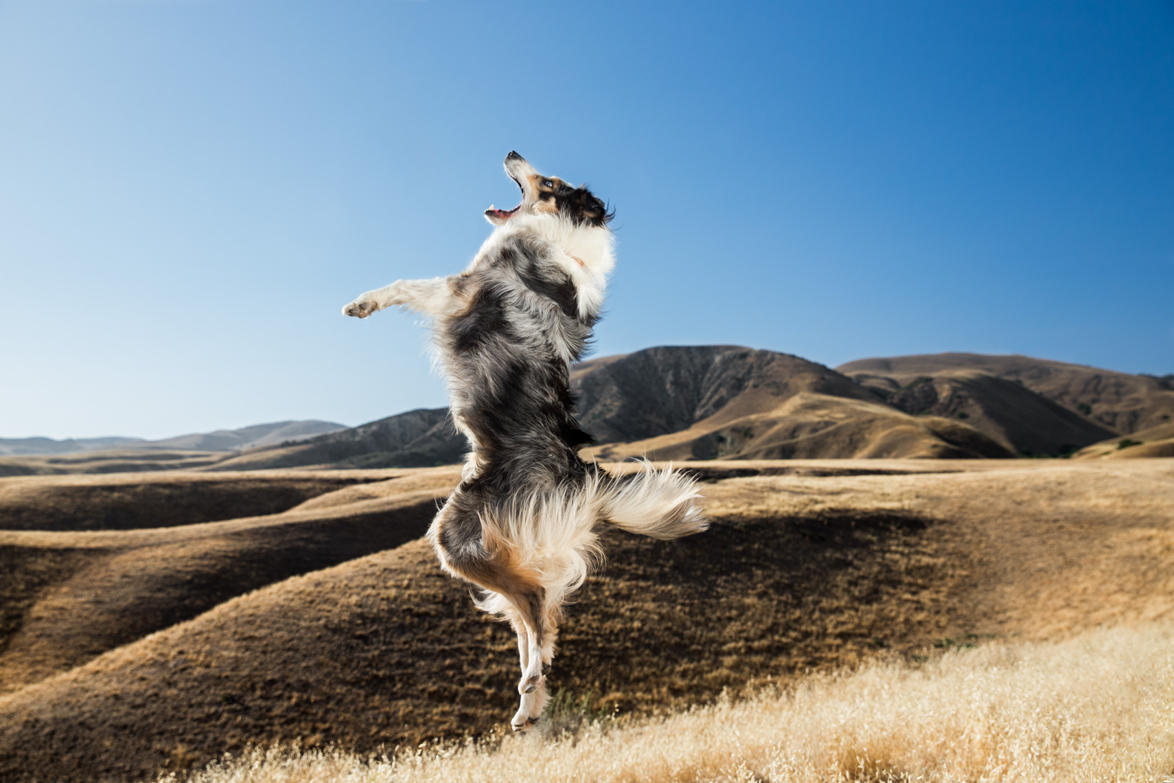 Los Angeles Dog Photography, Michael Brian, Purina, Border Collie, Big Sky Movie Ranch, Waggin