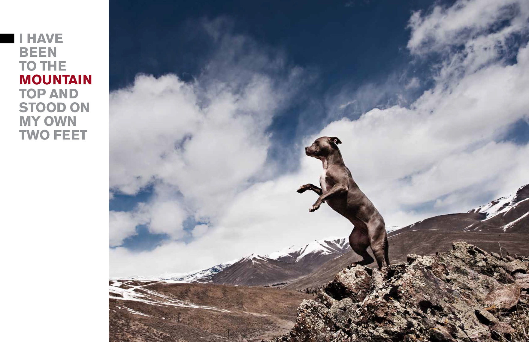 Los Angeles Dog Photography, Michael Brian, Pit Bull, mountain top, Sun Valley, Idaho, Blue Nose, Kasha Fierce