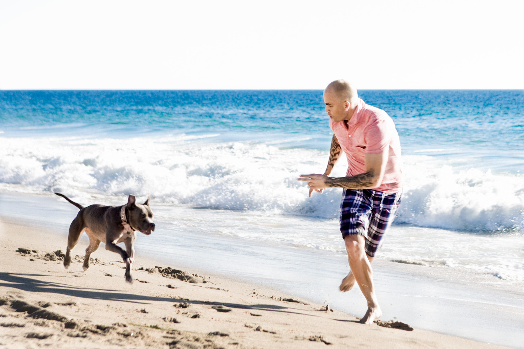 Los Angeles Dog Photography, Michael Brian, Tyson Kilmer, Pit Bull, run on beach, Kasha Fierce, Dog Trainer