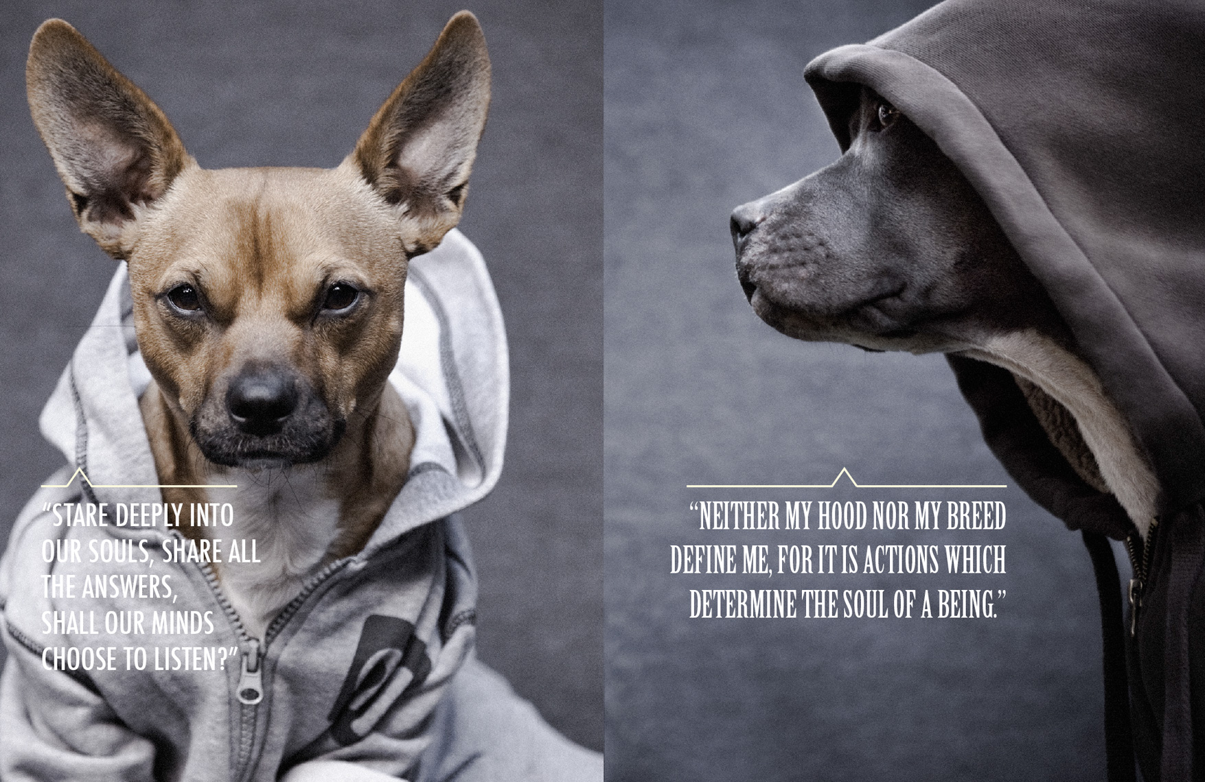 Los Angeles Dog Photography, Michael Brian, Pit Bull, Dogz n the Hood, Blue Nose