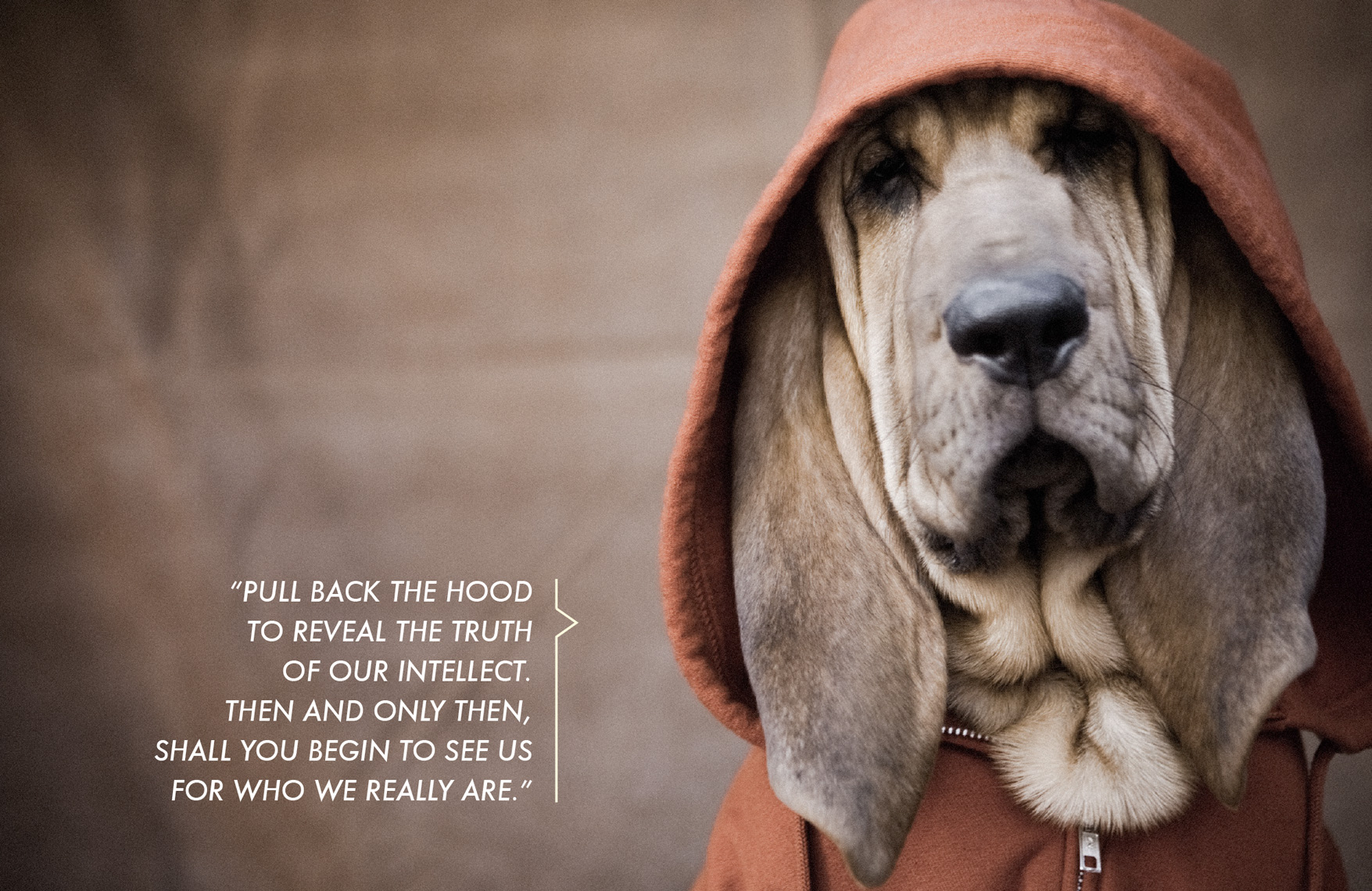 Los Angeles Dog Photography, Michael Brian, Bloodhound, Dogz n the Hood