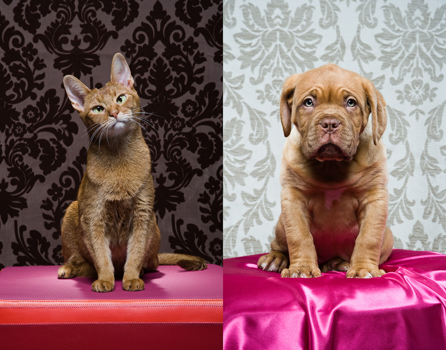 Los Angeles Cat Photography, Michael Brian, pet, dog