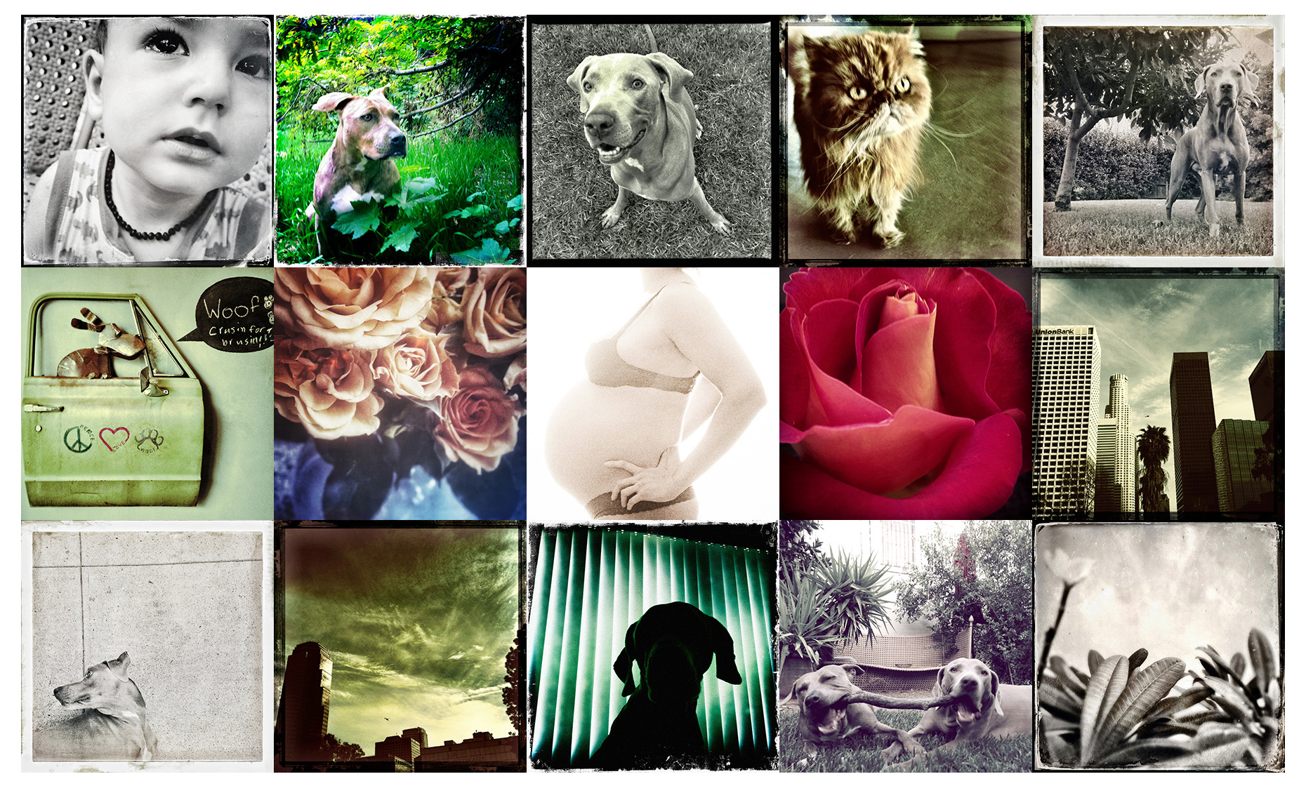 Los Angeles Dog Photography, Michael Brian, iphone photography, iPhoneography