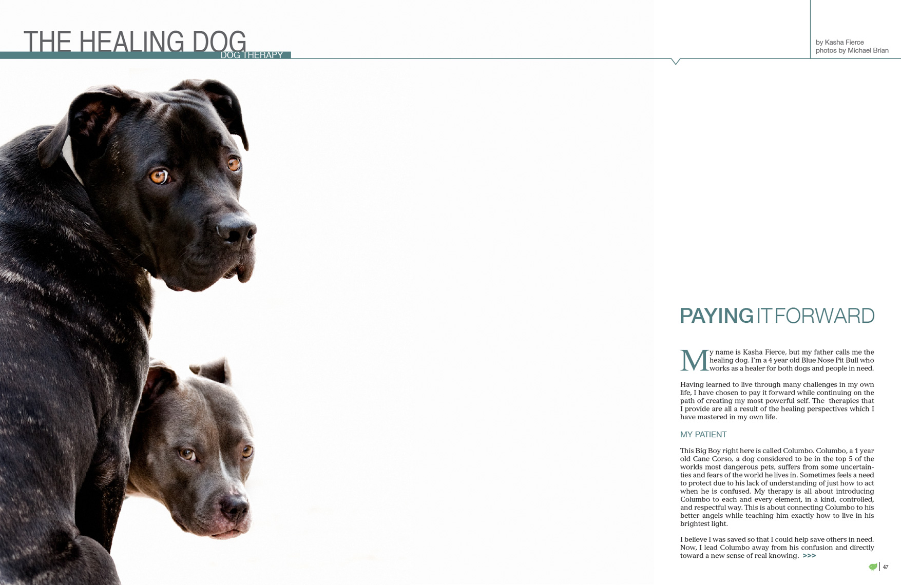 Los Angeles Dog Photography, Michael Brian, Dog Therapy, The healing Dog, paying it forward
