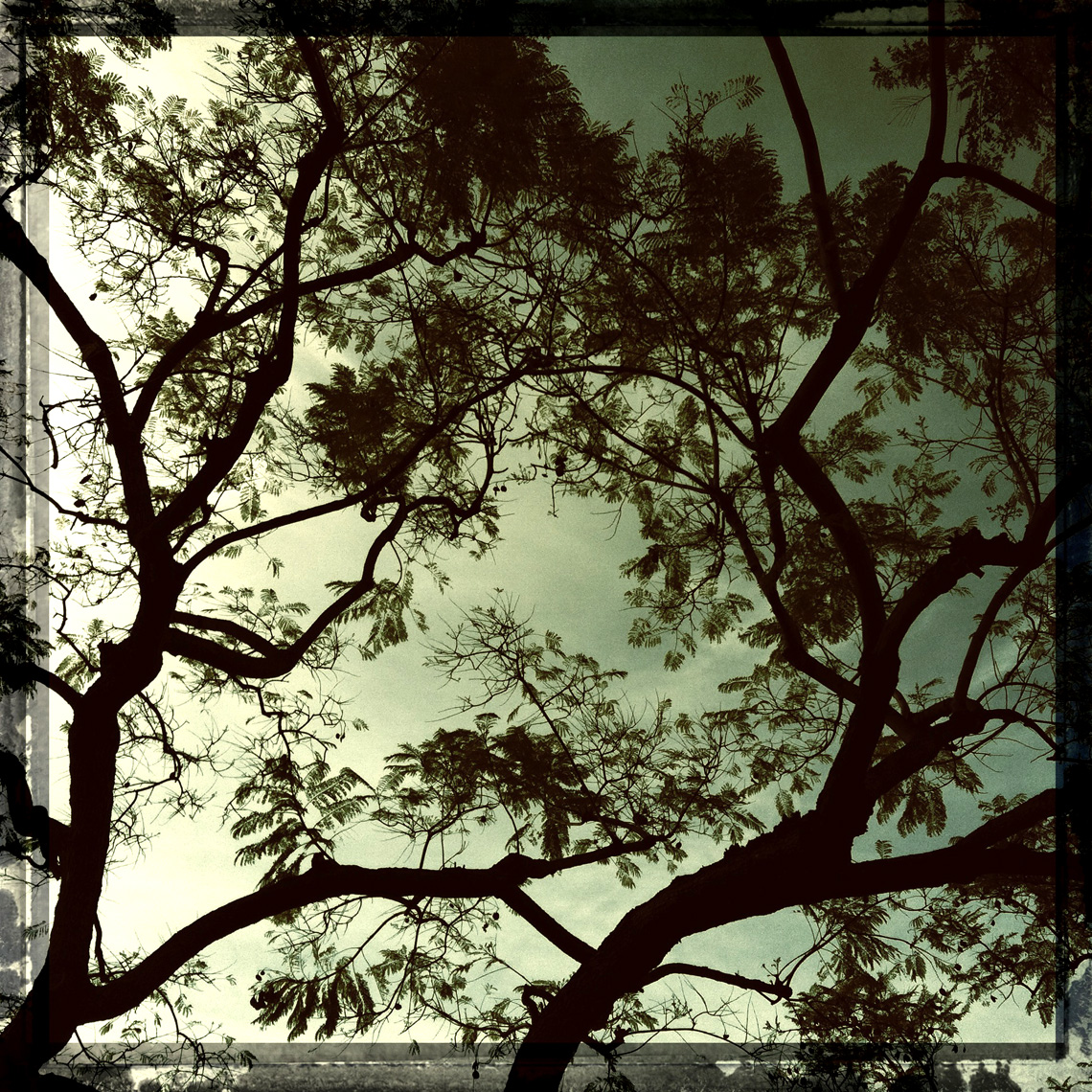 Los Angeles Dog Photography, Michael Brian, Tree silhouette, iphone photography, iPhoneography